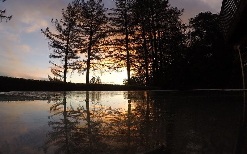 trees reflecting on the water